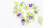 Campanula and lady's mantle arranged in a love-heart