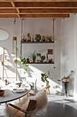 Various houseplants on suspended shelves in dining room