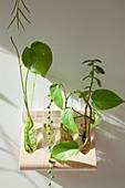 Verschiedene Pflanzen in Reagenzgläsern