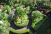 View down onto flowering roses edged with box hedges