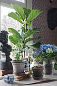 Verschiedene Zimmerpflanzen und klassische Deko am Fenster