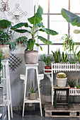 Houseplants on plant stands