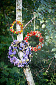 Wreaths of rose hips with and without yellow flowers and wreath of hydrangeas and blackcurrants hung on tree