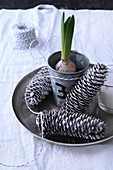 Christmas arrangement of silver pine cones and sprouting spring bulb