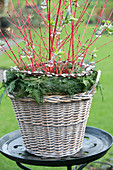 Florist's winter arrangement in wicker basket
