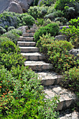 Stone steps surrounded by plants and granite boulders in garden
