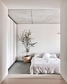 Blick ins minimalistische Schlafzimmer mit Doppelbett, Zimmerbäumchen und Schrank