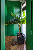 Banana tree next to window in front of green fitted cupboards