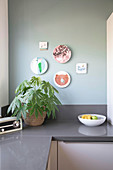 Paperplant on kitchen worksurface below decorative wall plates