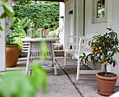 Potted orange tree and white outdoor furniture on veranda