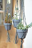 Succulents in macrame hangers