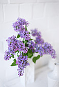 Purple lilac in white vase