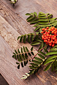 Sprig of rowan berries on wooden surface