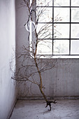 Glass bauble hung from small leafless tree with roots in front of industrial-style window