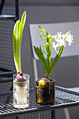 Two hyacinth bulb planters made from cut-off wine bottles