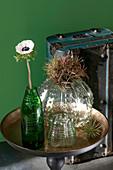 Anemone in einer abgeschnittenen Flasche neben Vasen mit Tillandsien