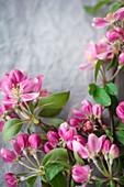 Blüten vom Zierapfel