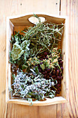 Tray of dried leaves and berries for making homemade herbal tea