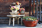 Autumn bouquets in baskets and Gaultheria in tub