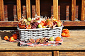Basket of multicoloured corncobs, chestnuts, physalis and autumn leaves
