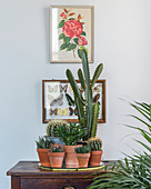 Cacti in front of vintage picture of roses and butterflies in display case