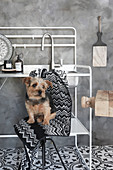 Kleiner Hund sitzt auf Hocker vor Metallgestell mit Spülbecken in schwarz-weißer Küche