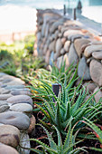 Rock garden with agave