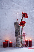 Wintry arrangement of red amaryllis, birch branch and pillar candles