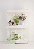 White, shabby-chic kitchen shelves made from small pallet