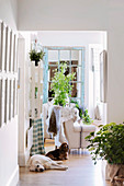 Two dogs in the hallway in a country house with summer plant decorations