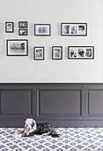 Dog lying on tiled floor in front of panelled wainscoting and gallery of photos on wall
