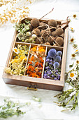 Dried flowers in drawer with dividers