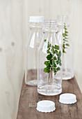 Zweige in Plastikflaschen als Deko