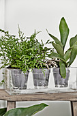 Plants in transparent pots in rectangular glass vase