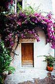 Bougainvillea growing over front door of Mediterranean house