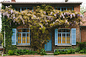 Wisteria growing on façade of brick house with blue shutters