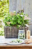 Sommerlicher Gurkensalat auf Gartentisch