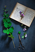 Leafy twig, sweet pea flowers, scissors and open book