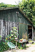 Old barn, green chair, bird table and sunflowers