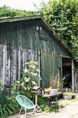 Alte Scheune mit grünem Gartenstuhl, Vogelhaus und Sonnenblumen