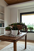 Succulents on wooden table in room with white walls