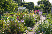 Allotments With Vegetable Beds And Perennial And Flower Borders In Midsummer