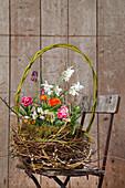 Wicker basket of spring flowers on chair