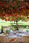 Rustic, set table below tree in autumn colours in garden