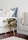 Houseplant and table lamp on round side table between double bed and sofa