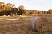 Hay bales in a landscaped garden
