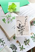 Gefaltetes Kleeblatt aus Papier auf botanischen Zeichnungen