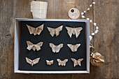 Paper butterflies pinned in display case
