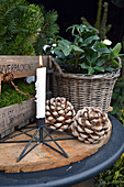 Pre-Christmas Arrangement With Christmas Rose, Candle And Pinecone