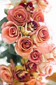 Dusky-pink roses